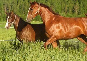 Nightflyer T ja Dein Liebling P (i. Duendecillo P)